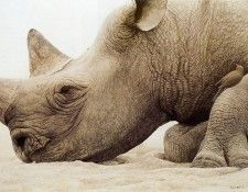 kb Bateman Rhinoceros Head and Oxpecker. Bateman, Роберт
