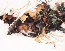 bs- Robert Bateman- Whitefooted Mouse In Wintergreen. Bateman, Роберт