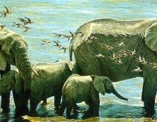 Safari 16 Elephants Robert Bateman sqs. Bateman, Роберт
