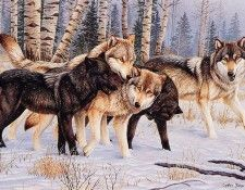 bs- Cynthie Fisher- Untitled[ Wolves]. Фишер, Cynthie