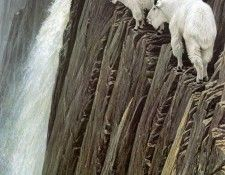 kb Bateman Sheer Drop Mountain Goats. Bateman, Роберт