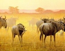 Safari 06 Wildbeest Robert Bateman sqs. Bateman, Роберт