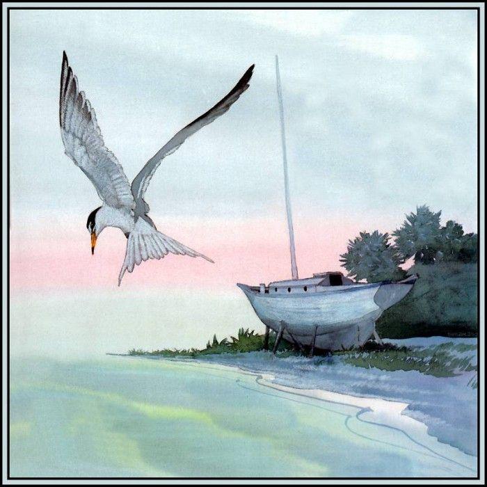 лодка крачка
