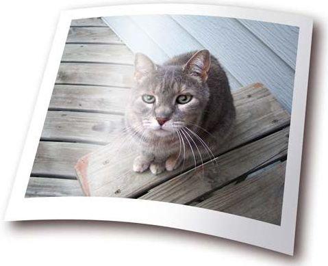 Виды фотобумаги: особенности и преимущества